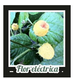 flor electrica